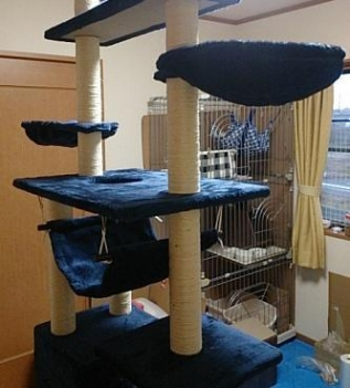 cats@202003150003.jpg