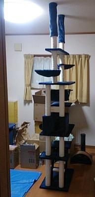cats@202003150004.jpg