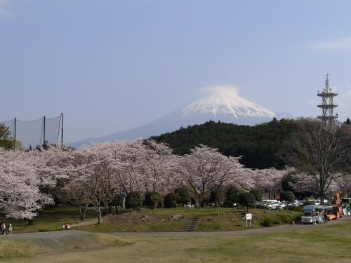 20200404桜1