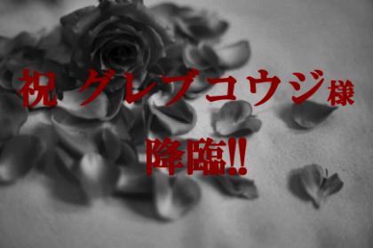薔薇カードのコピー22