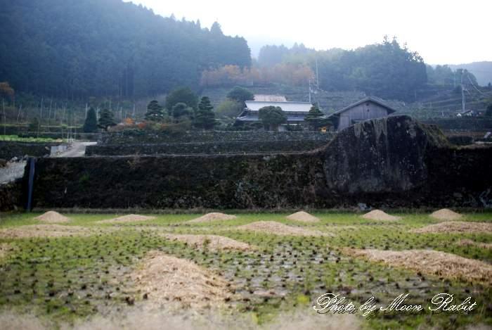 風透の段々畑の石垣