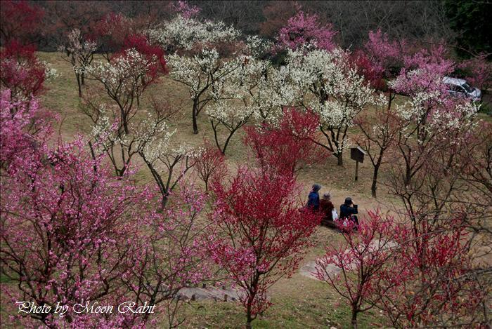 市民の森梅林園の梅