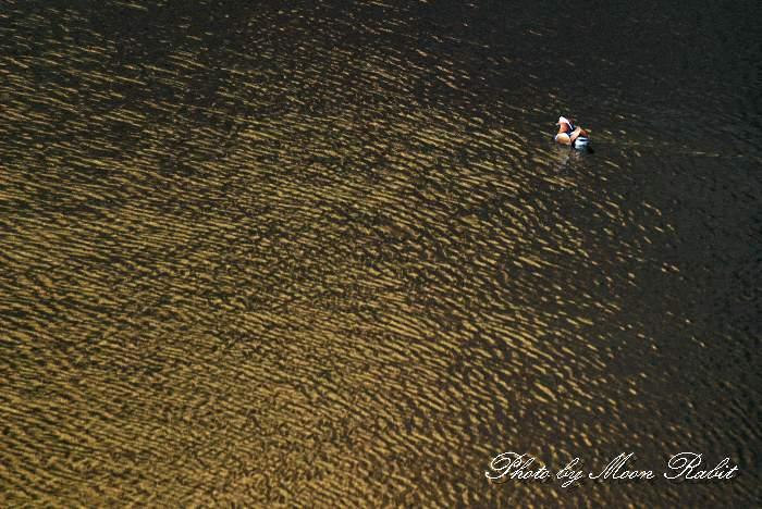 オシドリ 石手川ダム(白鷺湖) 愛媛県松山市宿野町