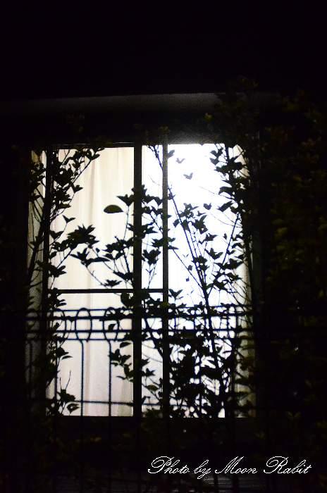 夜と植物 愛媛県西条市若草町