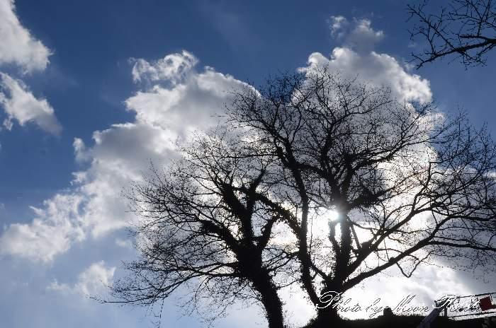 冬の樹 愛媛県西条市安用