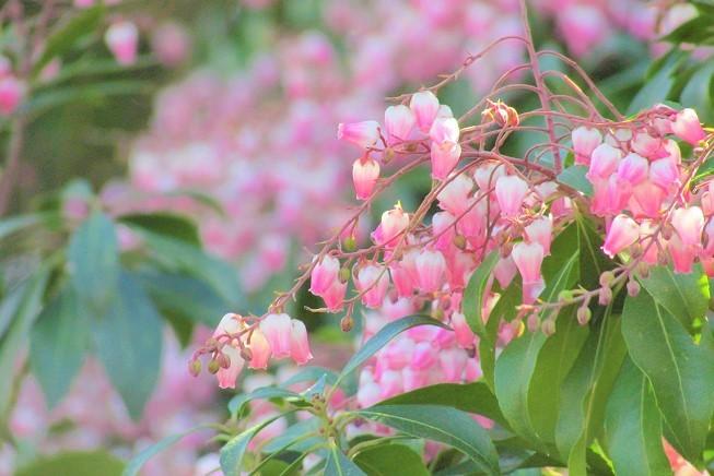 chikouzan200223-129.jpg