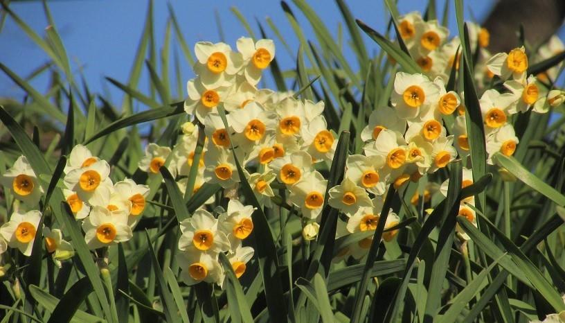 gongendou200103-103.jpg