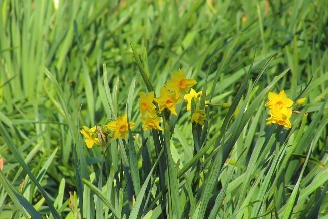 gongendou200103-105.jpg