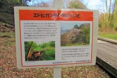 kitamoto200105-202.jpg