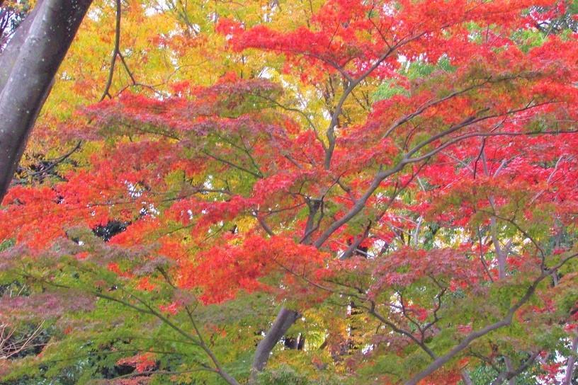 mizumoto191124-144.jpg