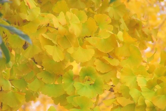 oomiyadaini191207-104.jpg