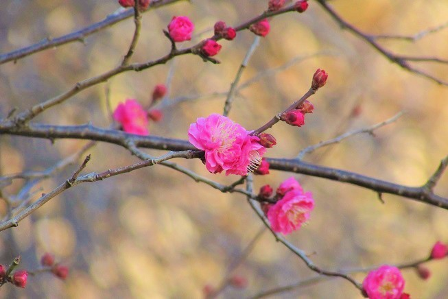 oomiyadaini200113-102.jpg