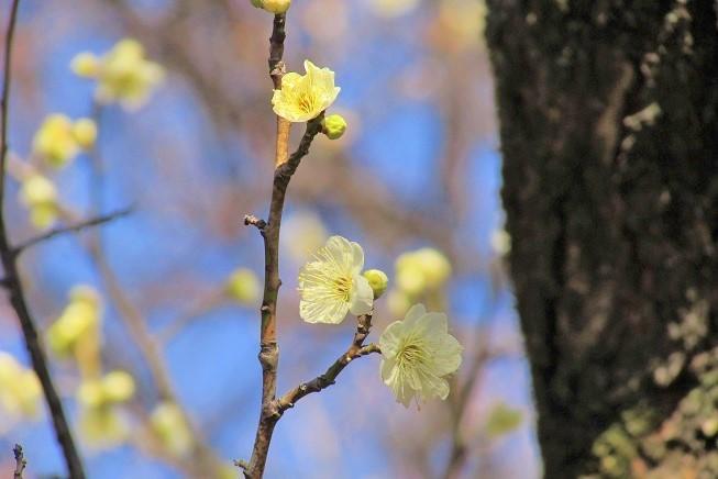 oomiyadaini200209-101.jpg