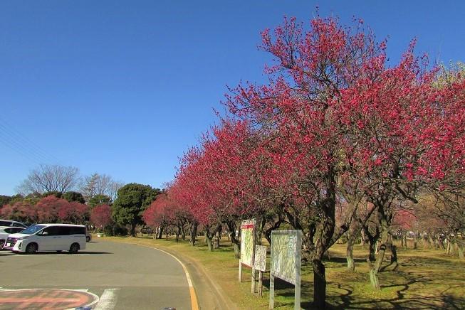 oomiyadaini200209-102.jpg