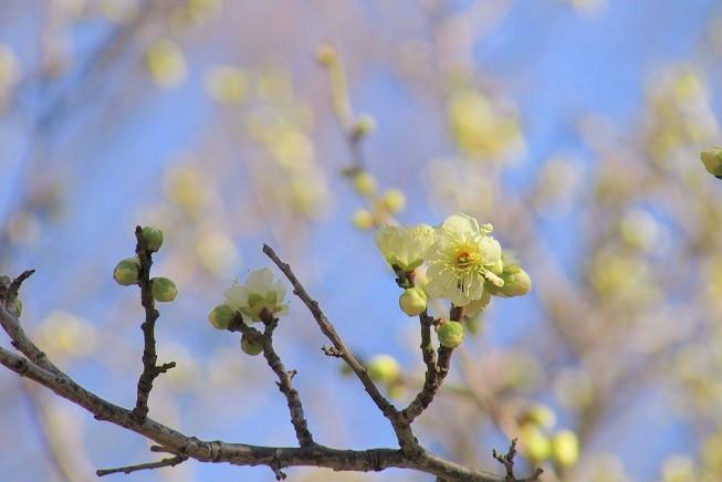 oomiyadaini200209-104.jpg