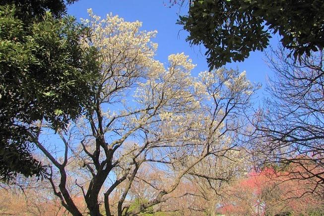 oomiyadaini200209-108.jpg