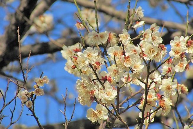 oomiyadaini200209-109.jpg