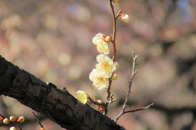 oomiyadaini200209-110.jpg