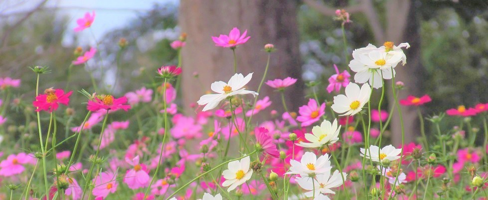 shouwa191027-123.jpg
