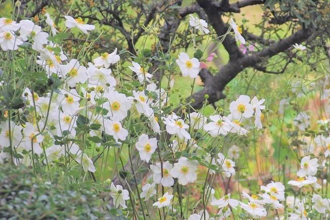 shouwa191027-124.jpg