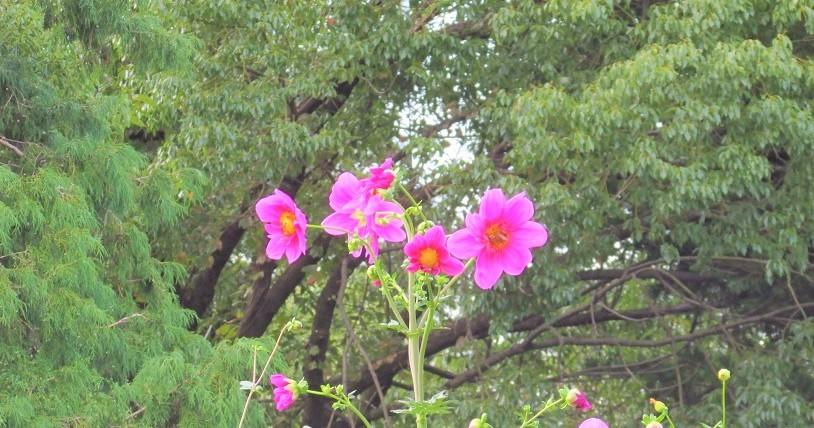 shouwa191027-138.jpg