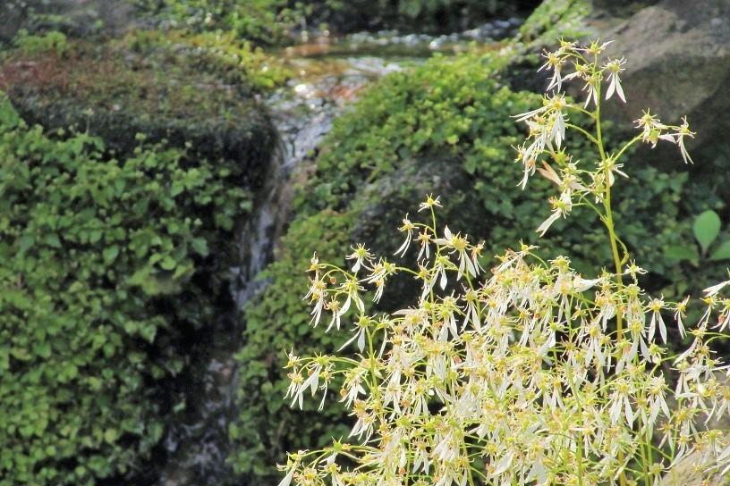 tukuba191103-139.jpg