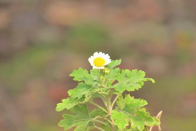 tukuba191103-151.jpg
