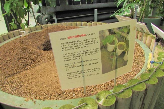 tukuba191103-163.jpg