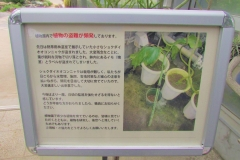 tukuba191103-201.jpg