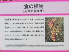 tukuba191103-202.jpg