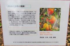 tukuba191103-204.jpg