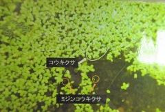 tukuba191103-205.jpg
