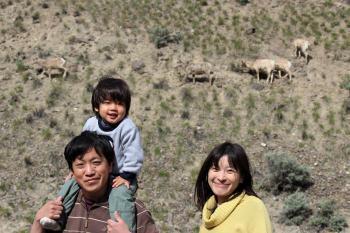 bighorn sheep 8