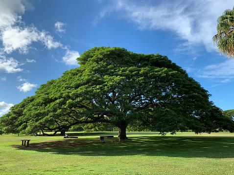 気になる木3