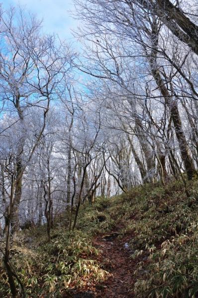 4皿ヶ嶺200101