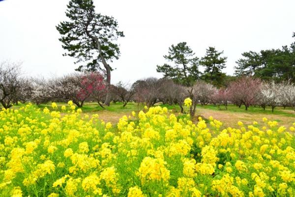 2志島ケ原200212
