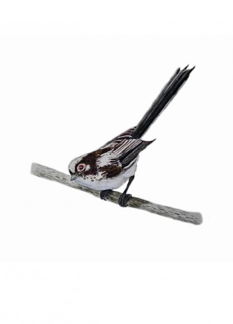 16770-エナガ 幼鳥-1