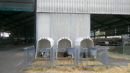 20200419牛舎