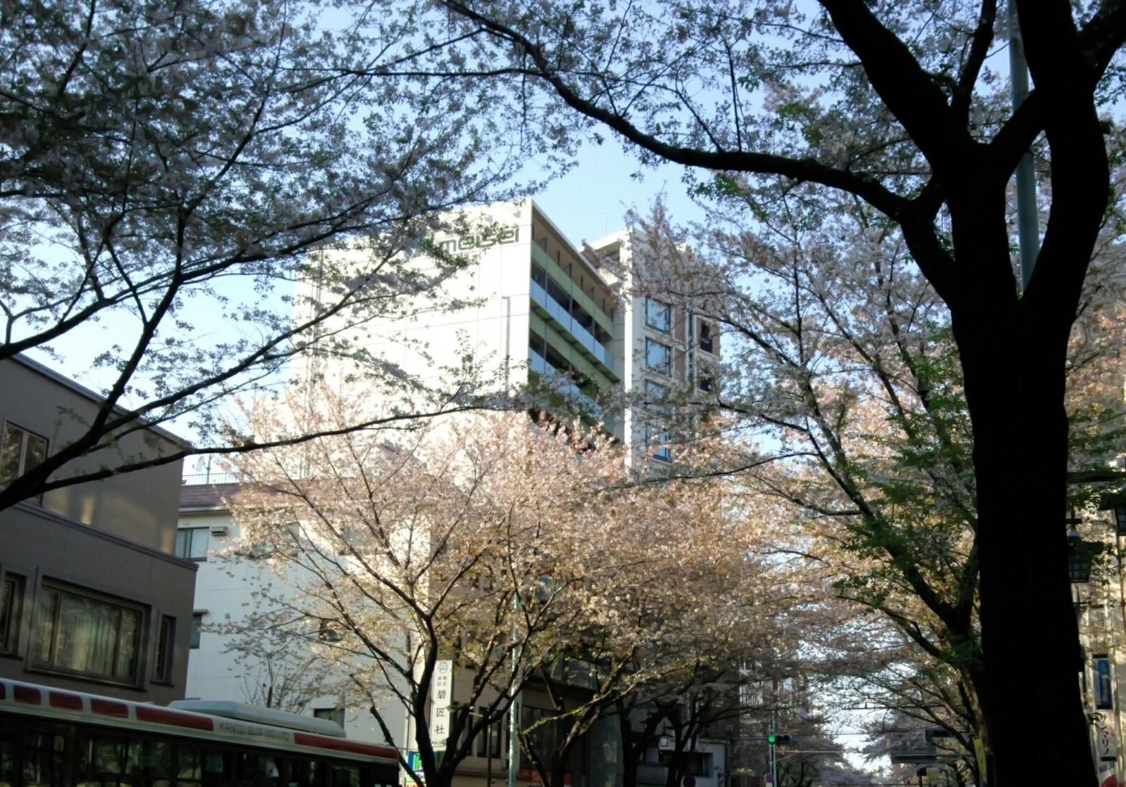 2020apr4桜KIMG0501 (2)